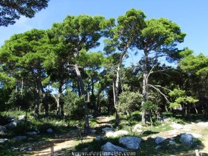 Dundo erdő